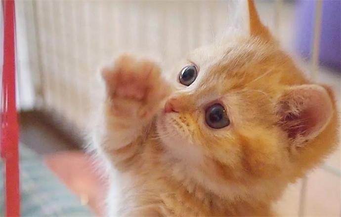 中的小橘猫一下击中了… 圆圆的眼睛 无辜纯真的脸庞 各种可爱小动作