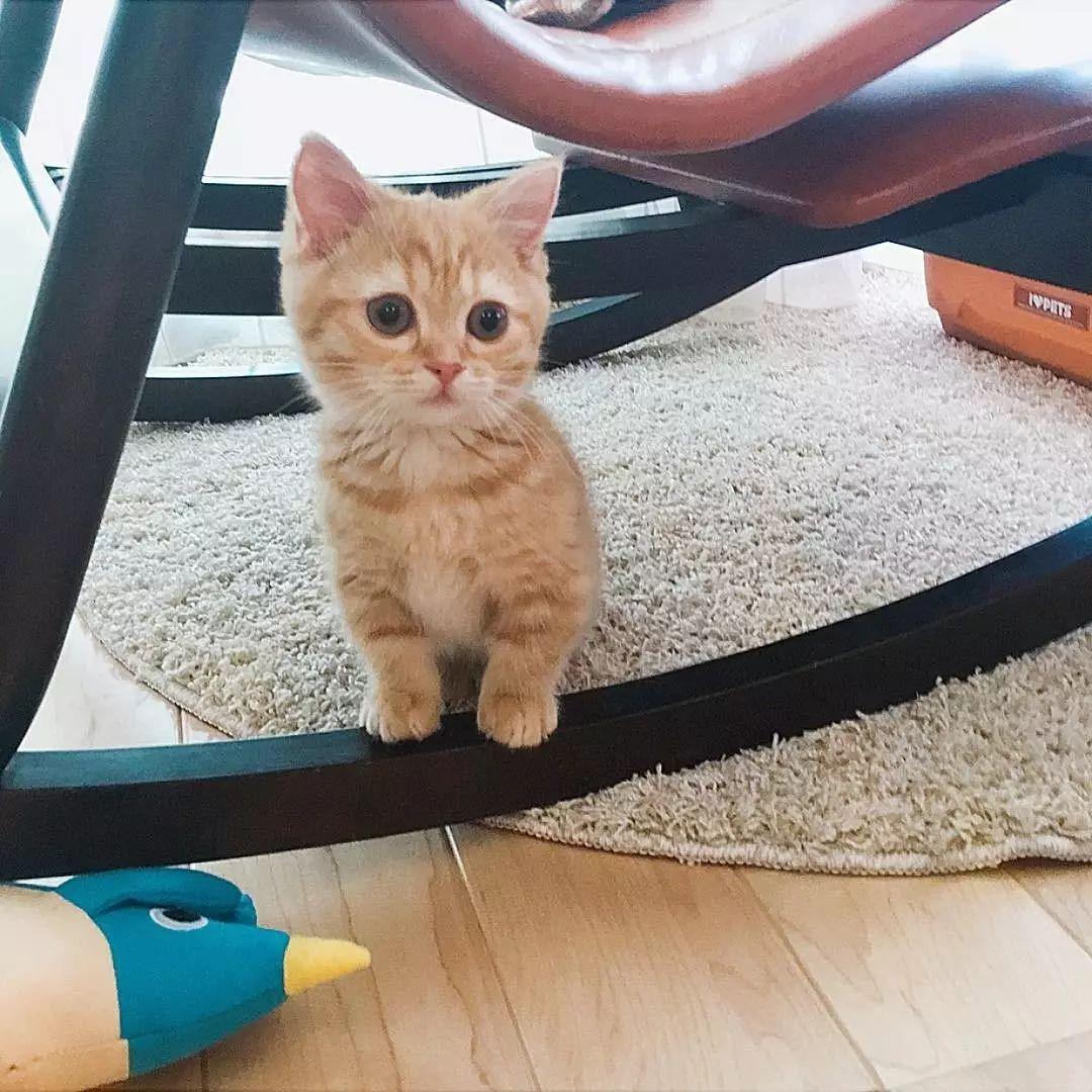 可爱猫咪委屈图像