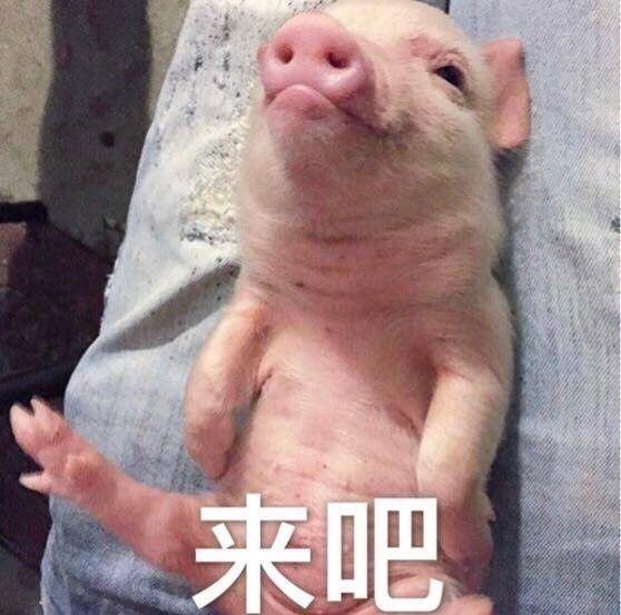 但这只吹风机小猪可以说是贼鸡儿可爱了.