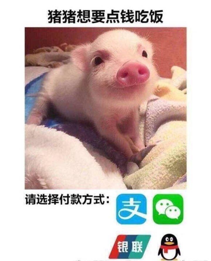 带字的猪猪表情同样具有撒娇卖萌等功能,非常适合撩妹或者被撩的时候