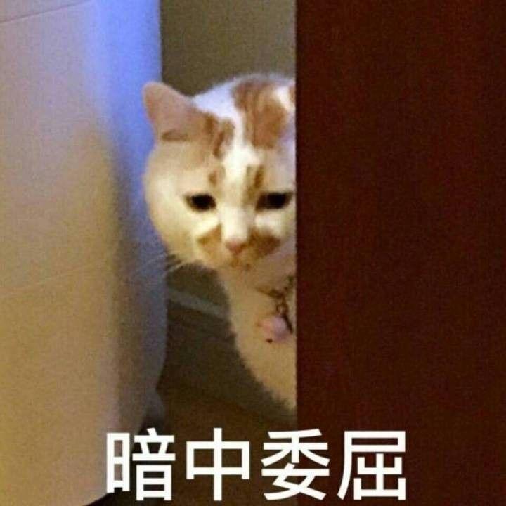 网红可爱猫头像高清